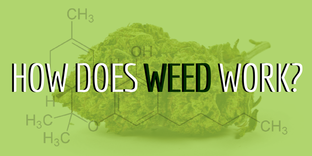 How does weed work-